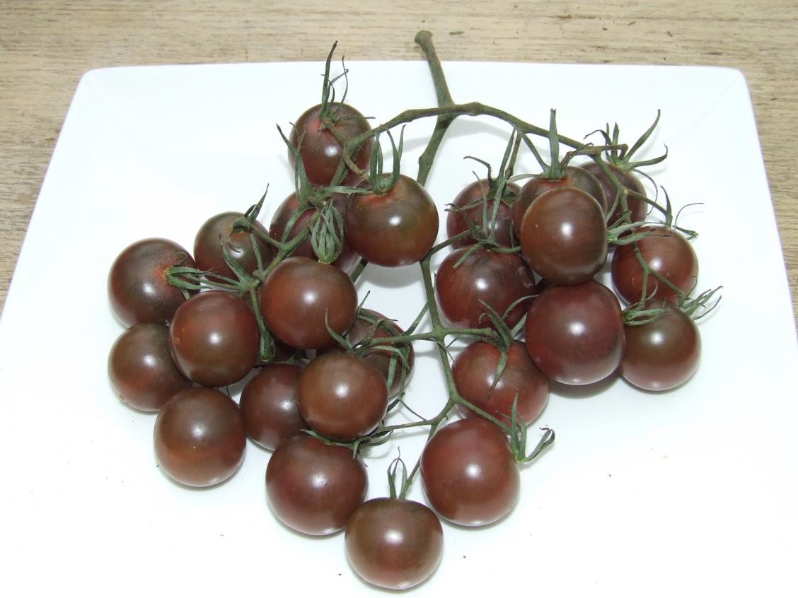 มะเขือเทศเชอรี่สีดำ - Black Cherry Tomato