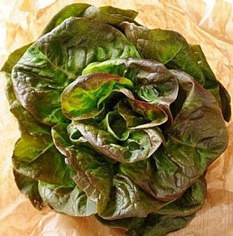 ผักสลัด บลอนซ์ มินยะเนท - Bronze Mignonette Lettuce
