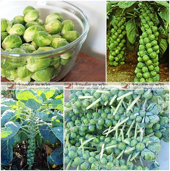 (Big Pack) กะหล่ำดาว - Brussels Sprout