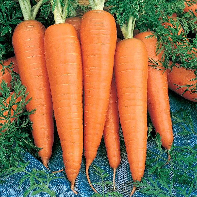 แครอทสีส้ม แดนเวอร์ - Danver Carrot