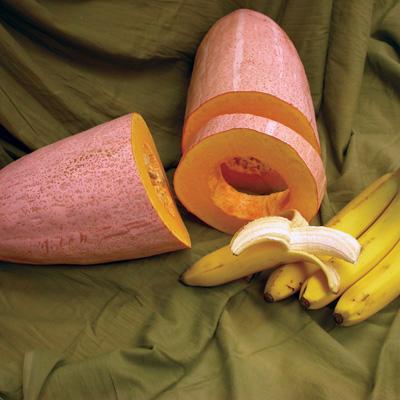 (Whole 1 oz) ฟักทองกล้วยสีชมมพู - Pink Banana Squash