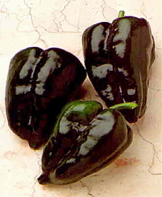 พริกแอนโช โพบลาโน่ - Ancho Poblano Pepper