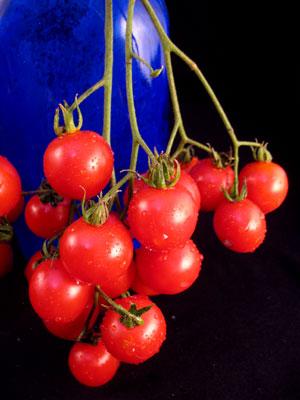 มะเขือเทศ รีเซนทาร์บ - Riesentraube Tomato