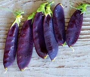 ถั่วลันเตาสีม่วง - Purple Sugar Pea