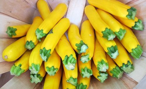 (Whole 1 oz) ฟักทองสครอซโกลเด้น ซูชินี่ - Golden Zucchini Squash