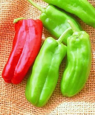 พริกหวาน มาโคนี่สีแดง - Red Marconi Pepper