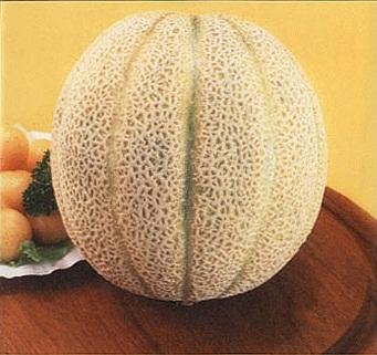 เมล่อน พันธุ์ดิลิเชียส51 - Delicious51 Melon