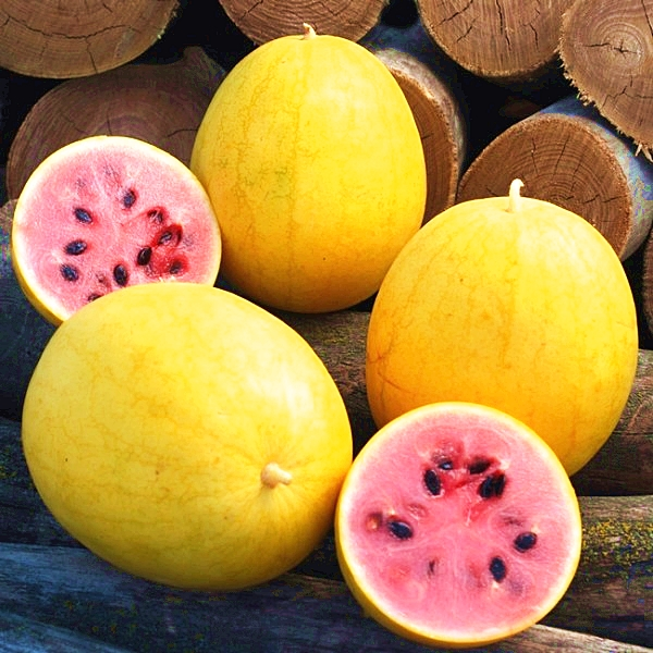 แตงโมเปลือกเหลือง - GOLDEN MIDGET Watermelon