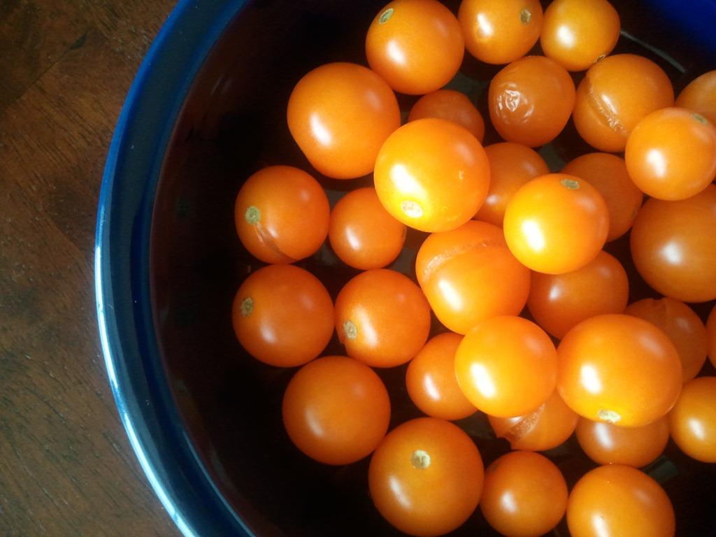 มะเขือเทศซันชูก้า - Sun Sugar Tomato F1