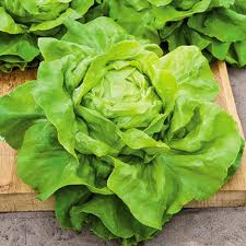 (Whole 1 Oz.) ผักสลัด บัตเตอร์คลั้น - Buttercrunch Lettuce