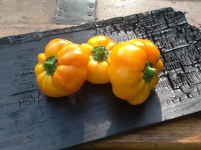 พริกฟักทองสีเหลือง - Yellow Pumpkin Pepper