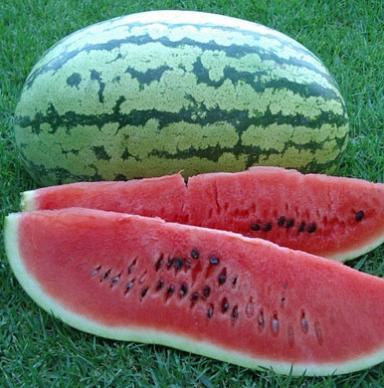 (Whole 1 Oz) แตงโมคลอนไดค์ - Klondike Striped Watermelon