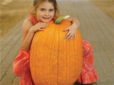 (Whole 1 oz) ฟักทองฮาโลวีน พันธุ์คอนเนคติคัท ฟิลด์ - Connecticut Field Pumpkin