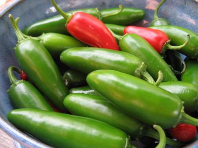 พริกจาราปิโน่ - Jalapeno Mexican Pepper