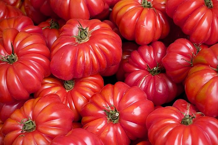 มะเขือเทศ คอสโตลูโต - Costoluto Tomato