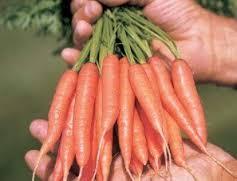 (Whole 1 Oz) แครอทจิ๋ว - Little Fingers Carrot