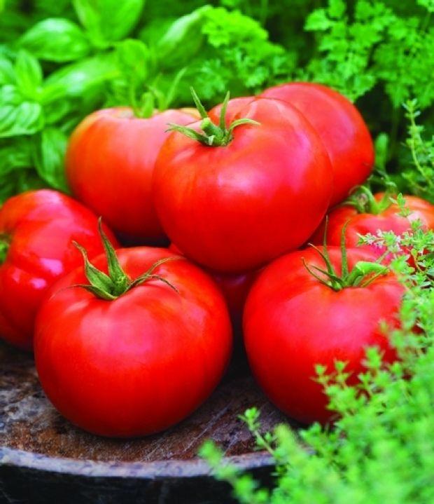 มะเขือเทศเอซีอี - ACE 55 Tomato