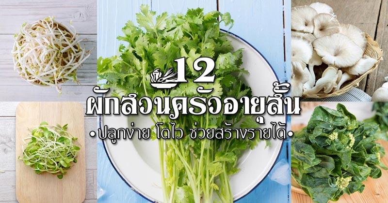 12 ผักสวนครัวอายุสั้น