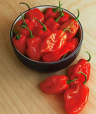 พริกฮาบาเนโร่สีแดง - Red Habanero Pepper