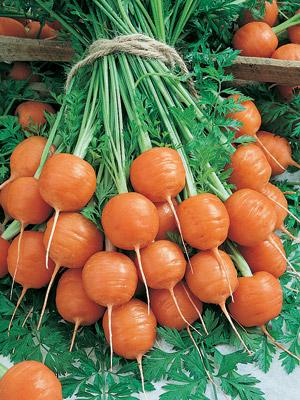 แครอท พันธุ์ปาริเซียน - Parisian Carrot