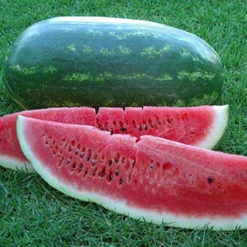 (Whole 1 Oz) แตงโมพันธุุ์คอนโก้ - Congo Giant Watermelon