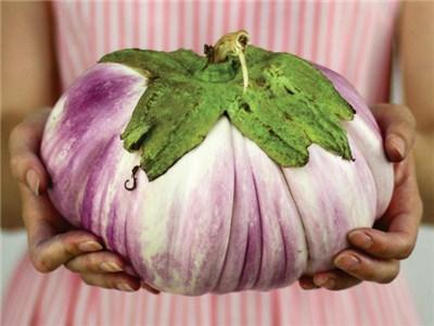 มะเขือยักษ์อิตาเลี่ยนสีชมพู - Pink Giant Italian Eggplant