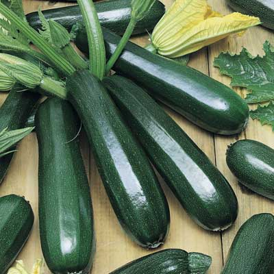 (Whole 1 oz) ฟักทองสครอชซูชินี่ แบล็คบิวตี้ - Zucchini Black Beauty Squash