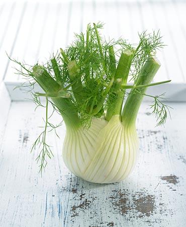 ผักชีลาวฝรั่ง - Florence Fennel Herb
