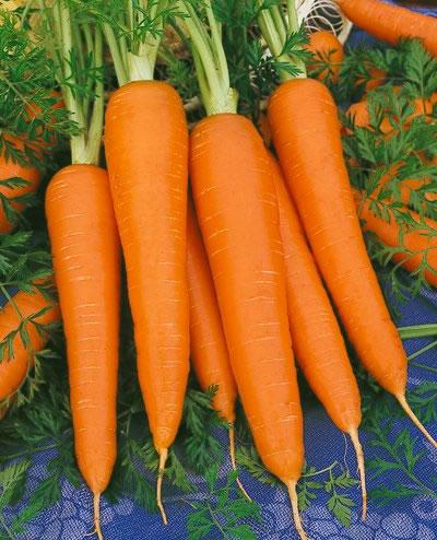 แครอทสีส้ม - Royal Chantenay Carrot