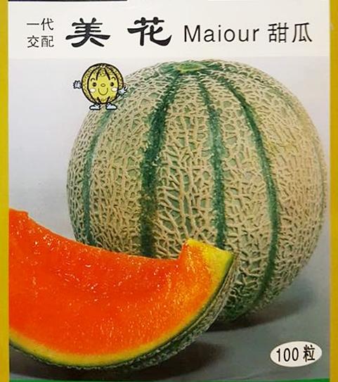 เมล่อน ไมออร์ - Maiour Japanese Melon F1