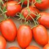 มะเขือเทศโรม่า - Red Roma Tomato