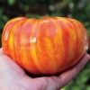 มะเขือเทศเรนโบว์ - Rainbow Tomato