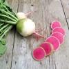 เรดิชแตงโม - Watermelon Radish