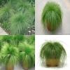 หญ้าประดับ เดสแชมเซีย เซฟเฟอร์ (Deschampsia Zephyr) 5เมล็ด/ชุด