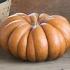 ฟักทองมัสกี - Musquee De Provence Pumpkin