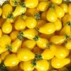 มะเขือเทศลูกแพรสีเหลือง - Yellow Pear Tomato