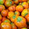 มะเขือตุรกี - Turkish Orange Eggplant