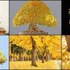 ปริ๊นซ์ตัน โกลด์ ยูโรเปียน นอร์เวย์ เมเปิ้ล 2 เมล็ด/ชุด