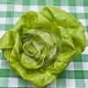 ผักสลัด บิบ - Bibb Lettuce