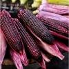 ข้าวโพดสีม่วงจีน เฮ่ยนัว - Heinuo Purple Corn