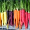 แครอทคละสี - Mixed Rainbow Blend Carrot