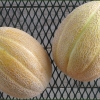 (Whole 1 Oz.) เมล่อน เฮลเบสจัมโบ้ - Hale's Best Jumbo Melon