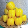 พริกหวานแคลิฟอร์เนียสีเหลือง - Yellow Sweet Pepper