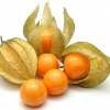 แคปกูสเบอรี่ - Cape gooseberry
