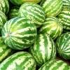 (Whole 1 Oz.) แตงโมคิมสันสวีท - Crimson Sweet Watermelon