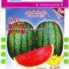 ตะวันต้นกล้า : แตงโมกินรี