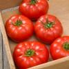 มะเขือเทศ มาร์แมนด์ - Marmande Tomato