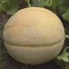 เมล่อน เฮลเบส จัมโบ้ - Hale's Best Jumbo Melon