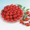 มะเขือเทศชูการี - Sugary Tomato F1