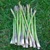 หน่อไม้ฝรั่ง พันธุ์เมรี่ วอชิงตัน - Mary Washington Asparagus